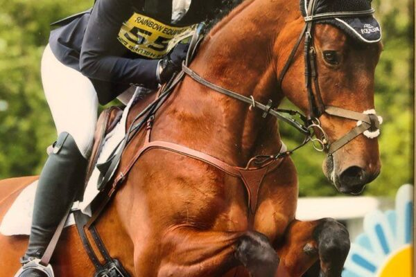 Mare owned by Emma Silman out of Aldatus mare